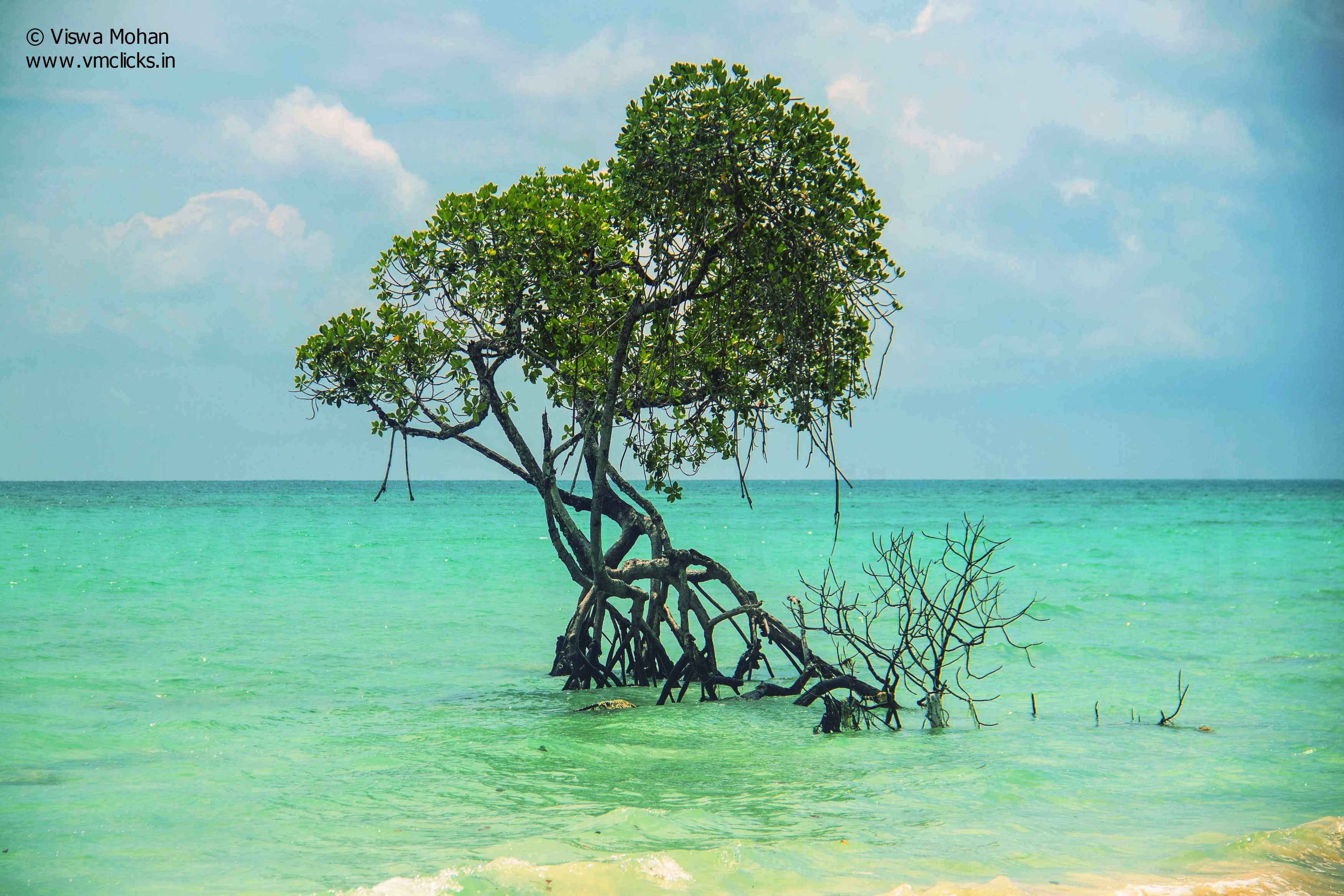 Mangroves at Havelock Islands