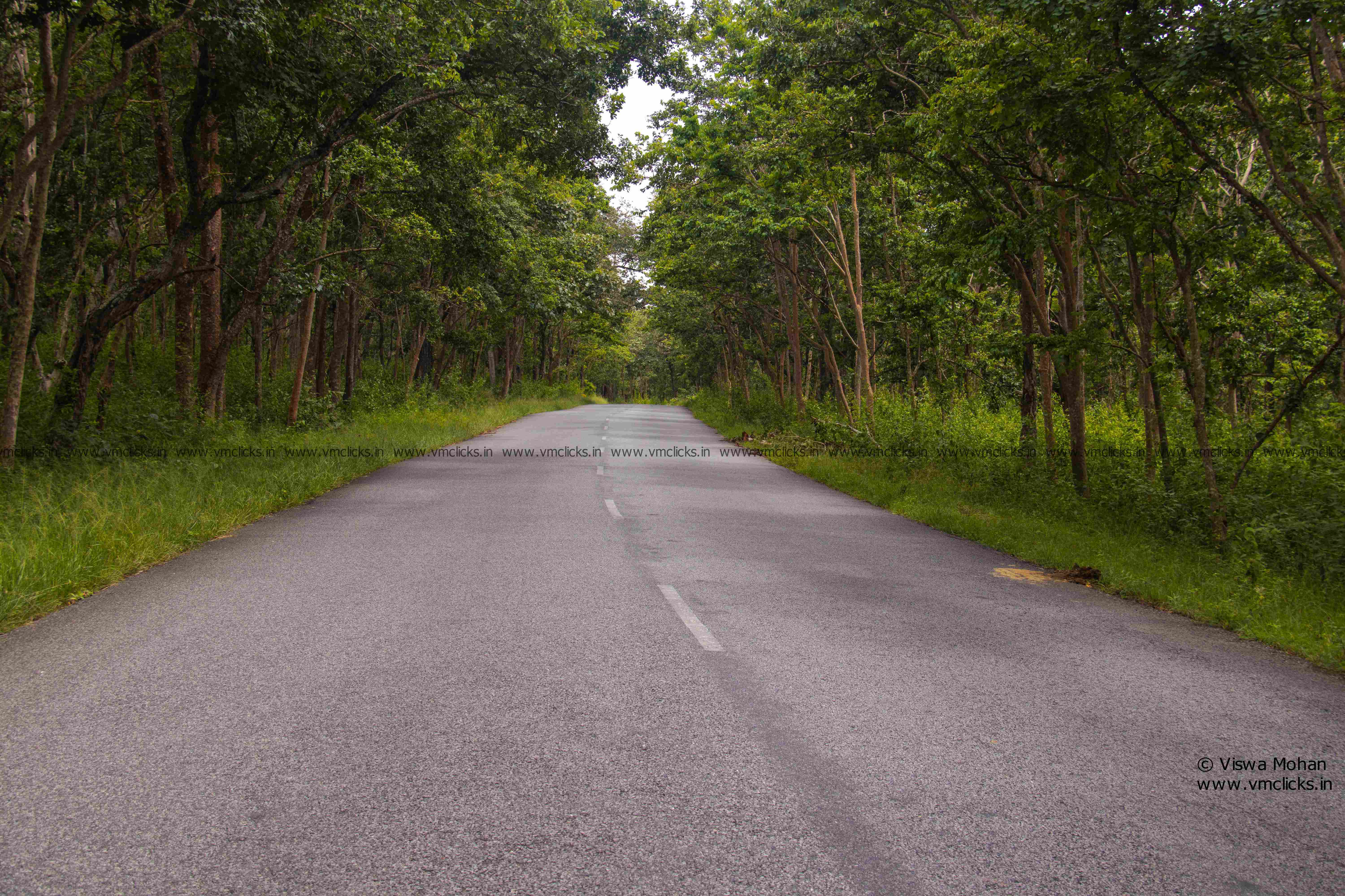 Wayanad – Bandipur Route