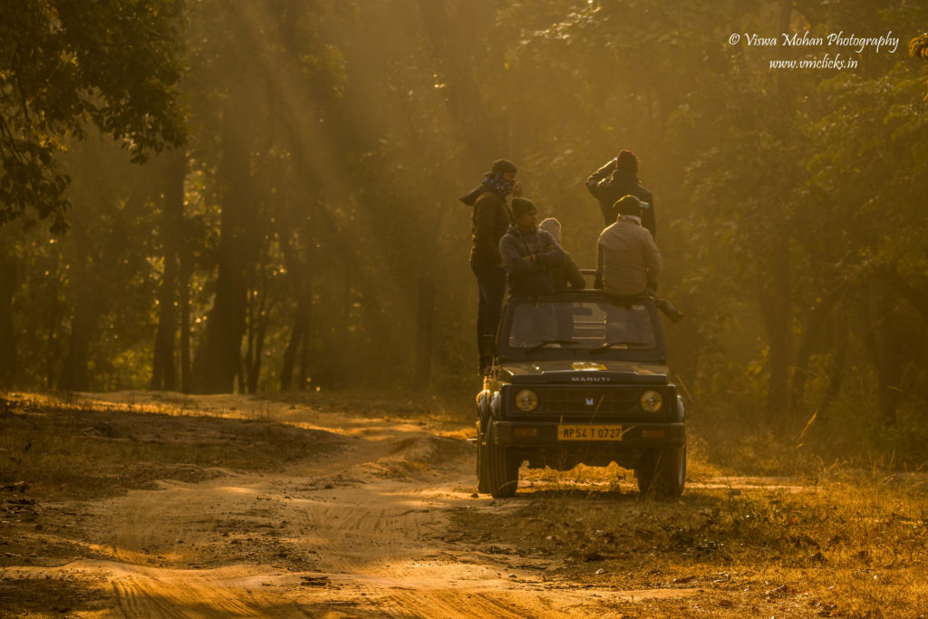 Jeep Safari @ Bandhavgarh National Park