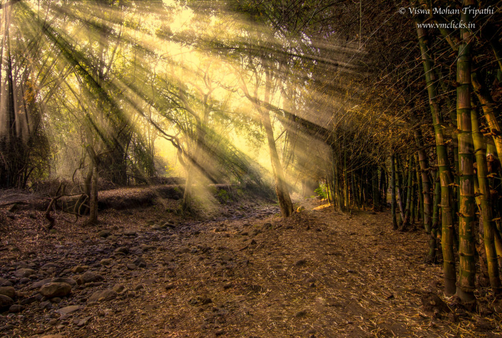 Lightbeam in the forest through Trees